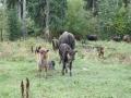 Buffalo Ranch Golden