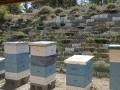 Behausung der Bienenvölker Teil 2