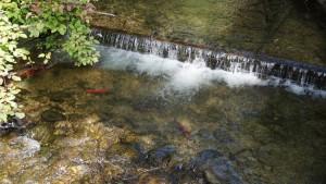 Kokanee Hardy Falls
