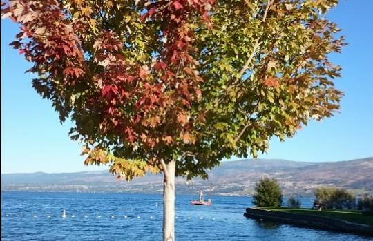 Sichere Anzeichen für den Herbstbeginn im Okanagan Valley